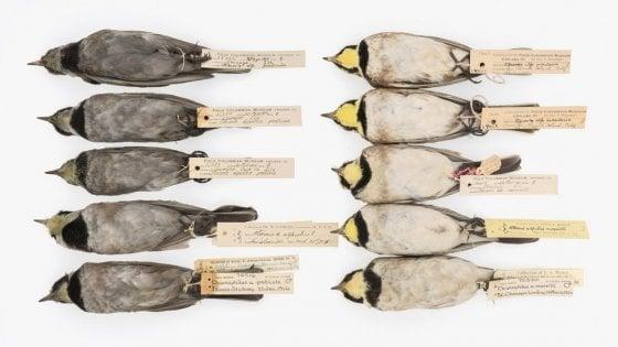 Una volta erano neri per l'inquinamento: cosa ci insegnano gli uccelli sulle politiche ambientali