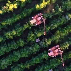 Colture Bayer viste dal drone