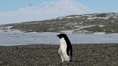 Antartide, una strage di pinguini:  solo due pulcini sopravvissuti tra 40mila