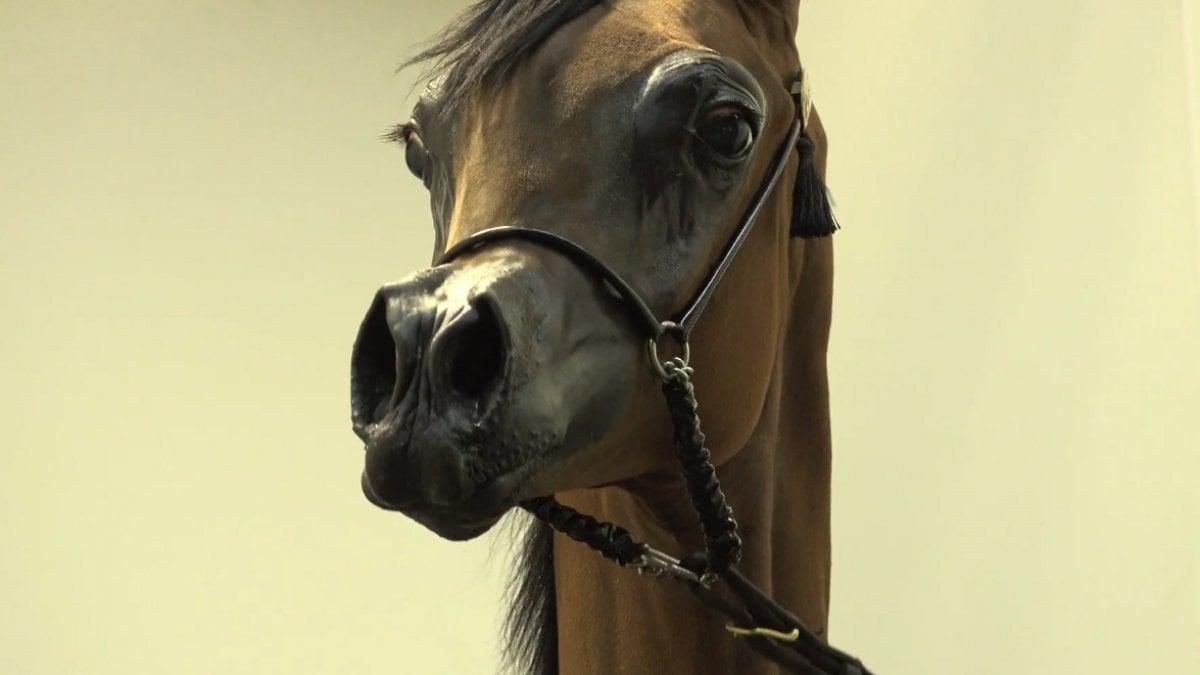 El rey il cavallo che sembra un cartone animato i