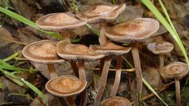 Allucinogeni e depressione, un composto di funghi è efficace nel combatterla