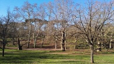 Ci vuole un albero. Urban Nature: alla scoperta del verde in città