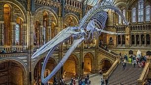I musei hanno conservato il mondo, ora si tratta di salvarlo