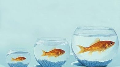Anche i pesci sono depressi (soprattutto quelli che vivono nella boccia...)