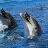 Balene e delfini conducono vite