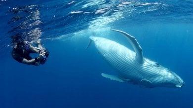 Balene e delfini si chiamano  per nome e fanno pettegolezzi