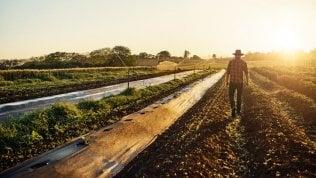 Agricoltura sostenibile: ora c'è un modello da seguire