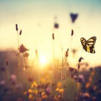 """Abbiamo perso tre quarti degli insetti volanti. Gli esperti: """"E' un Armageddon ecologico"""""""