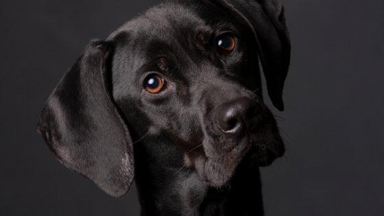 Se il cane fa gli 'occhi dolci' è perché lo stai guardando