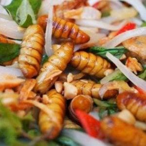 Vermi fritti al posto delle patatine? Da gennaio insetti a tavola: ma il 54% degli italiani dice no