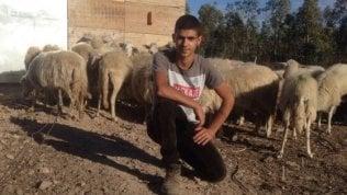 """La favola di Elia, pastore a 17 anni: """"Grazie alla solidarietà dei sardi, ho di nuovo il mio gregge"""""""