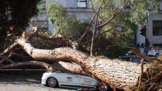 Crolla un albero: distrutto un taxi, illeso l'autista