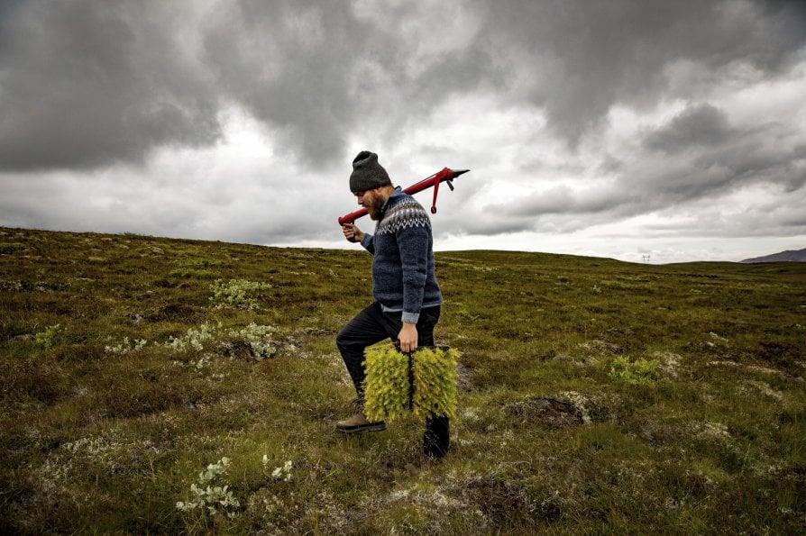 L'Islanda rivuole gli alberi tagliati dai vichinghi