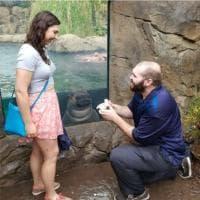 Usa, proposta di matrimonio speciale allo zoo: il photobombing dell'ippopotamo Fiona