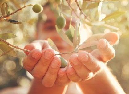 A spasso tra gli ulivi: una giornata di omaggio ai territori dell'oro verde