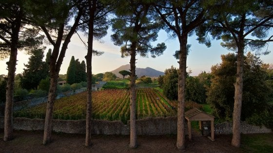 Oggi a Pompei il tradizionale taglio dell'uve nei vigneti del Triclinio Estivo
