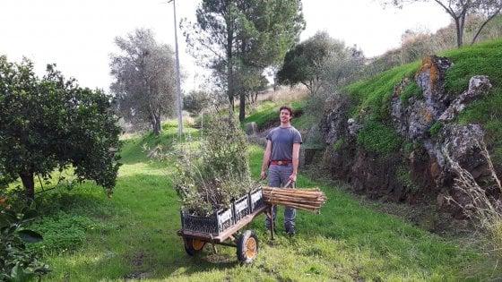 Querce, mimose e acacie: il bosco in Sicilia che rinasce col crowdfunding in un'area devastata da incendi e frane
