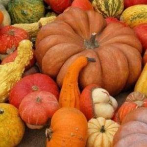 Halloween a tavola, i benefici della zucca