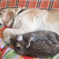 Russia, il cane Tessie adotta due cuccioli di leopardo respinti dalla madre