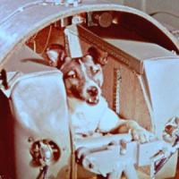 Laika, 60 anni fa il volo sullo Sputnik. L'addestratrice: