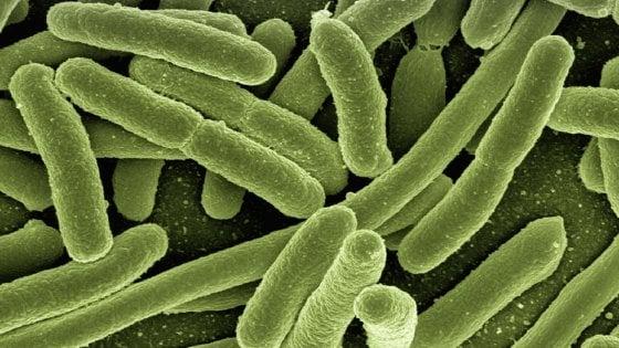 Immunoterapia: la risposta dipende anche dai batteri