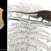 Dai resti dei piccoli mammiferi tracce dell'evoluzione dell'uomo