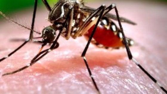 Usa, vendesi 'zanzara killer': si accoppia e blocca la riproduzione dei suoi simili