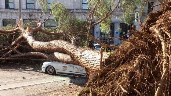 È autunno, a Roma (e non solo) cadono gli alberi