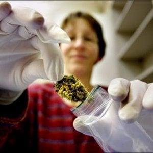 Serve più cannabis terapeutica, stanziati più di 2 milioni per le serre