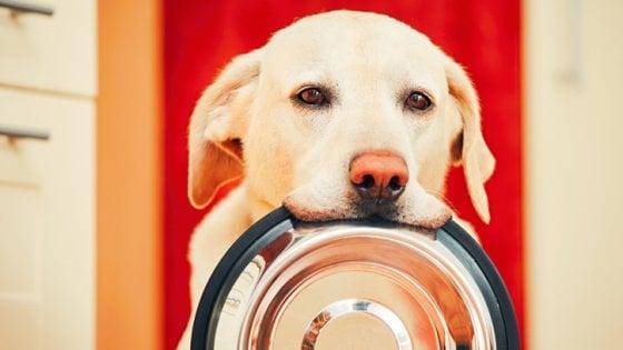 Cane, il benessere è nel microbioma: ecco la dieta ideale