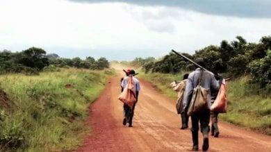Zambia, contadini cacciati dai campi   Video   per coltivazioni destinate all'esportazione