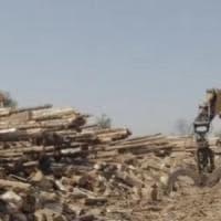 Il bosco dimenticato e l'import di pellet illegale.