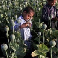 Afghanistan, record produzione di oppio: 9 mila tonnellate, +87% rispetto al 2016