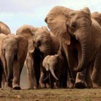 Trump ci ripensa: per ora resta il divieto di rientrare con trofei di caccia