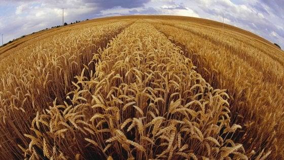 I giovani contadini nei campi dello Stato: Torniamo alla terra