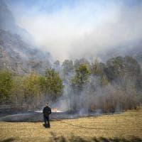 Giornata nazionale degli alberi: necessari 15 anni per ricreare i boschi bruciati in...