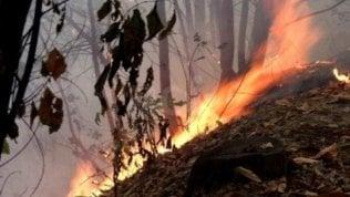 Giornata nazionale degli alberi: necessari 15 anni per ricreare i boschi bruciati in estate