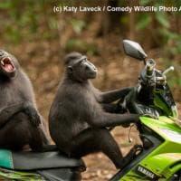 Quando la natura fa ridere: ecco i 40 scatti finalisti del Comedy wildlife awards