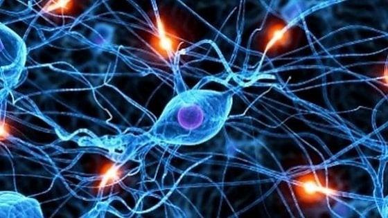 Il cervello pianifica in modo automatico le azioni su alcuni oggetti