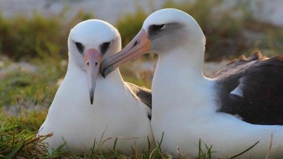 Allarme albatros: dimezzati per la pesca e le modifiche all'ecosistema