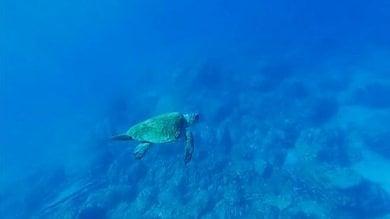 Caccia alle microplastiche negli oceani  con il colorante fluorescente