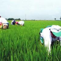 Resistenza antimicrobica in cibo e agricoltura, una sfida decisiva