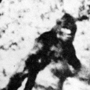 """""""Lo Yeti? È solo un orso"""": il dna smonta la leggenda dell'uomo delle nevi"""