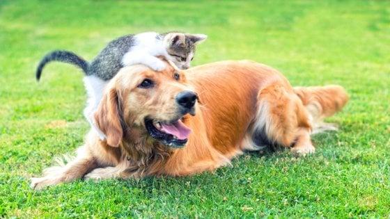 I cani sono più intelligenti dei gatti: è la conta dei neuroni del cervello a suggerirlo