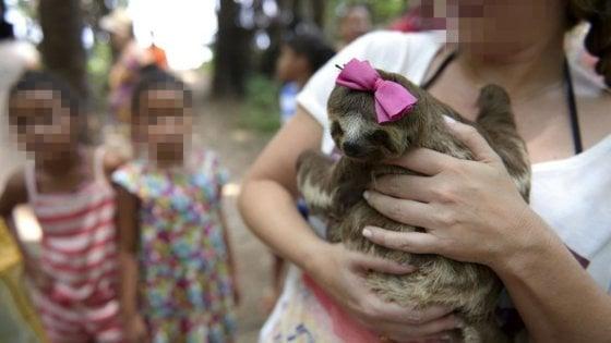 Instagram difende natura e animali  Ecco l'avviso per gli hashtag violenti