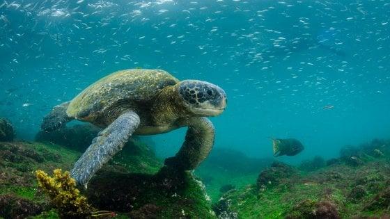 Dalle Galápagos al Myanmar: 2018, le mete dove non andare