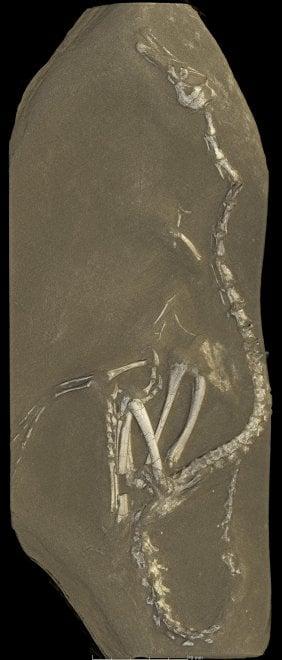 Il dinosauro che sembrava una papera