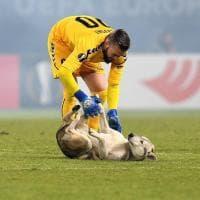 Vardar-Rosenborg, all'improvviso spunta un cane in campo