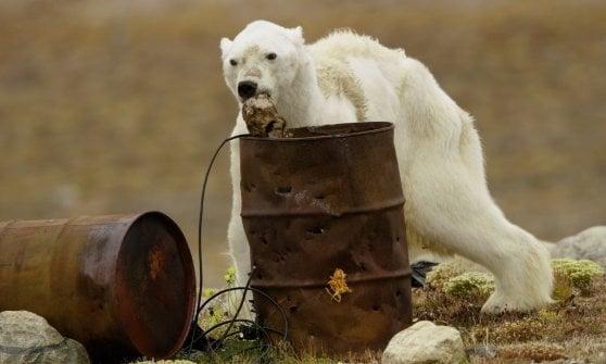 """Lo straziante video dell'orso polare che muore di fame: """"L'ho ripreso per smuovere le coscienze"""""""