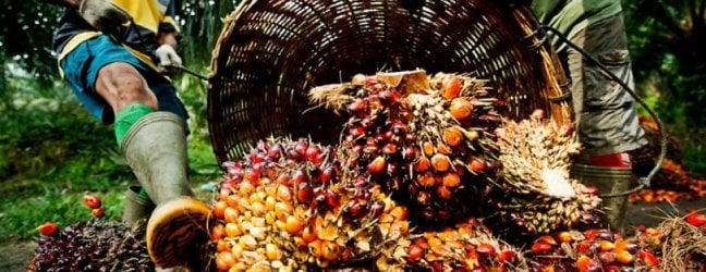 Questa settimana in edicolaOlio di palma, miliardi nel piattola resa dei conti tra le lobby del cibo